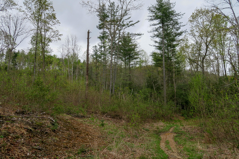 Wash Creek Trail -- 2,450'