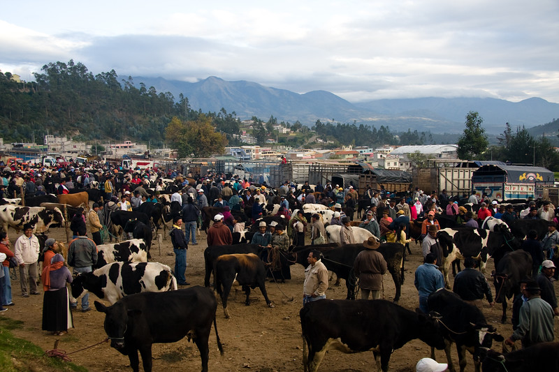 otavalo-animal-market_4882402786_o.jpg