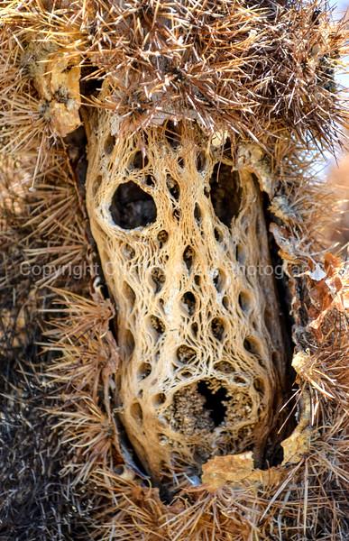 cactus face.jpg