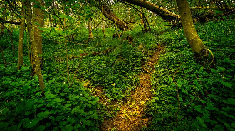 Along the path to Hareshaw Linn.