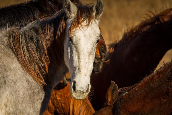 Mustang Horses at ISPMB in South Dakota