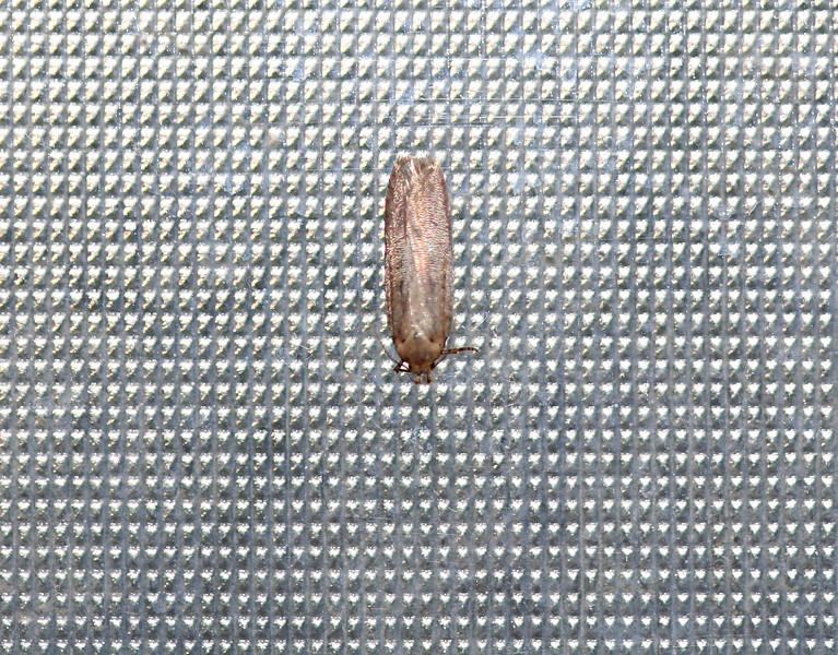 2558 Moth on Window flash.jpg