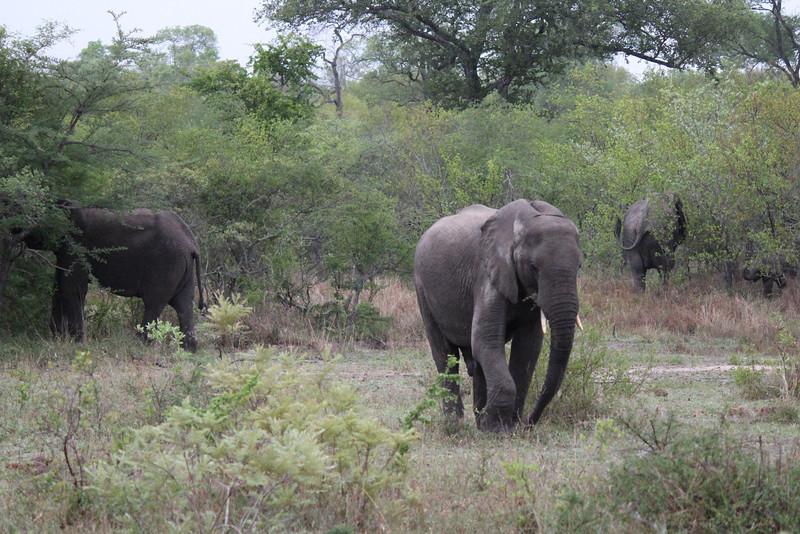 Africa Trip 2012 349.jpg