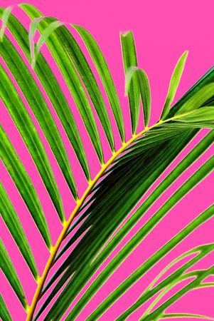 Colored palms for Gitanas
