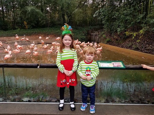 Zoo Cookies with Santa - 12.2.18