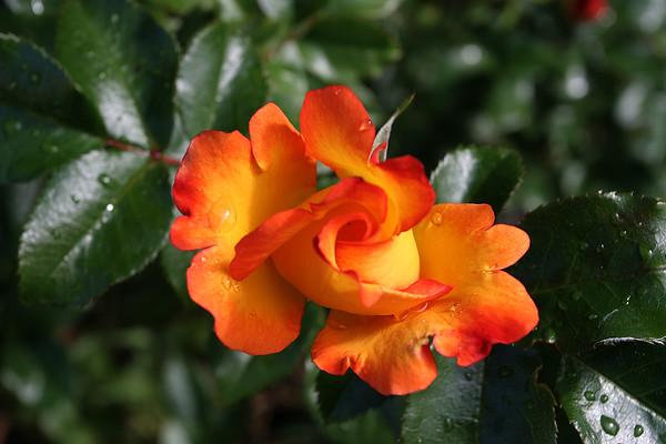 Flowers_060510_0042.JPG