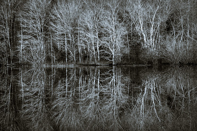 Winter Tree Reflection