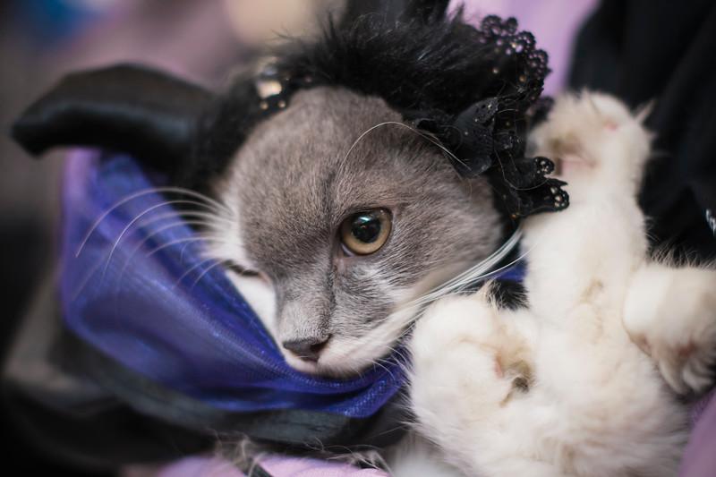 VividSnaps-The-Seletar-Mall-CAT-Dress-Up-Contest-230.jpg