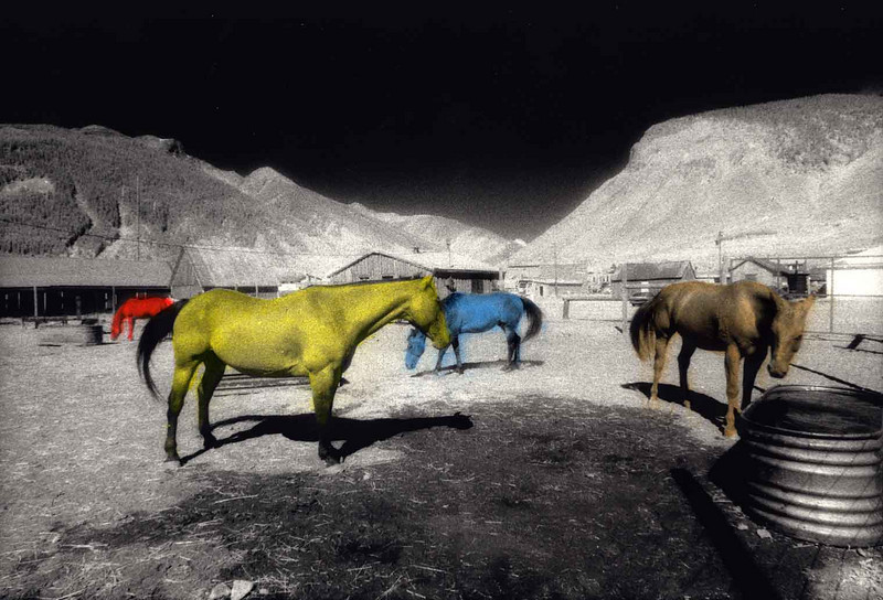 "HORSES OF A DIFFERENT COLOR This was actually the very first attempt at hand-tinting photographs, as you can tell by the bleeding of color ""outside the lines."" I'd always thought this was a rather ho-hum photo, so I thought I would liven it up a bit. I think it worked"