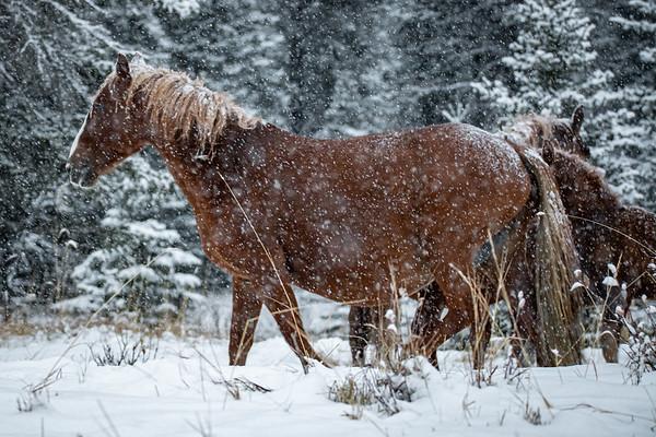 10-21-20 Ab. Wildies - First Snow Storm
