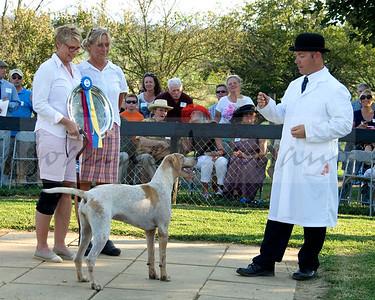 Blue Ridge Hunt Hound Puppy Show