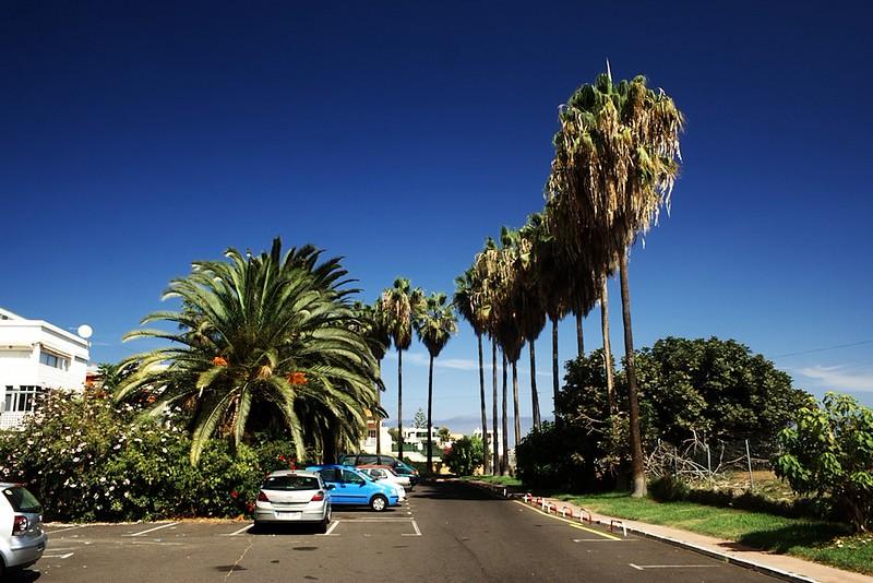 Palmy u parkoviště hotelu Eden