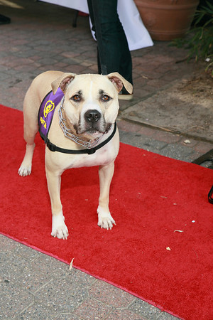 Pawject Runway Red Carpet 2013