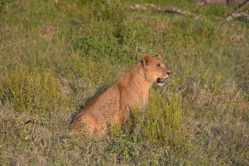 East Africa Safari 130.jpg