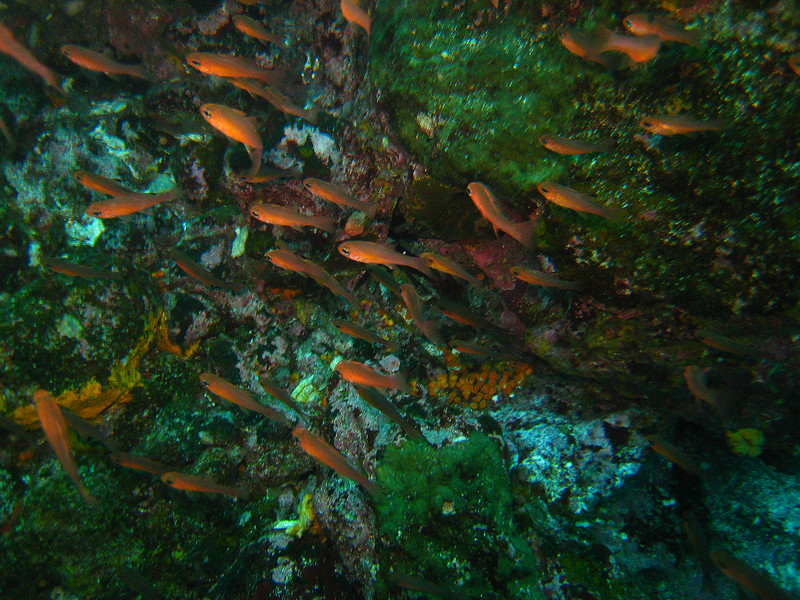 Diving in the Galapagos (241 of 392)