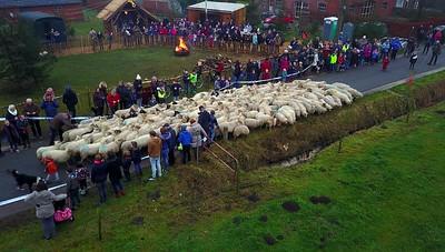 20161228 Schapen Aarle kerststal