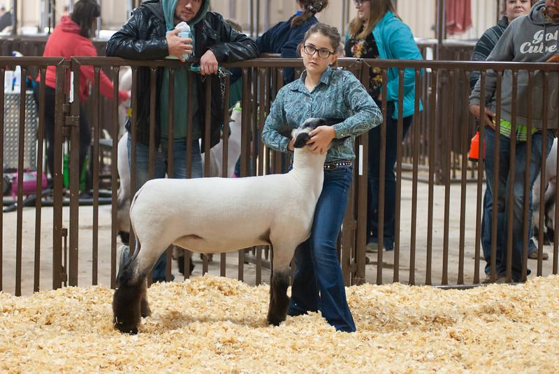 kay_county_showdown_sheep_20191207-34.jpg