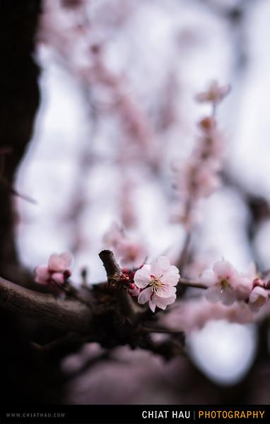 Japan_Tokyo_Apr_2016-244.jpg
