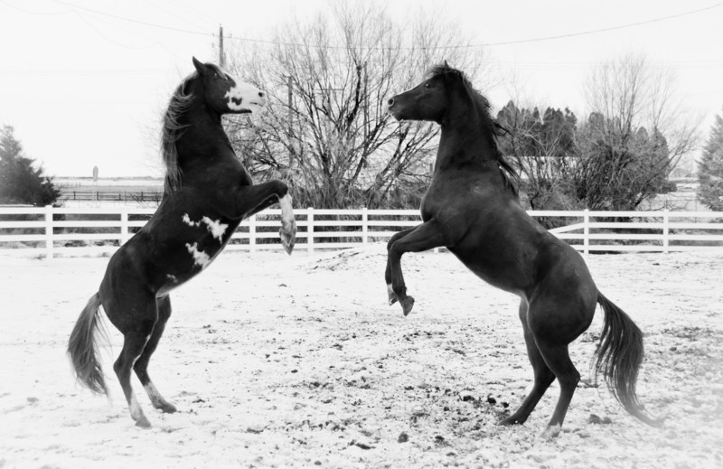 Rumbling Stallions I
