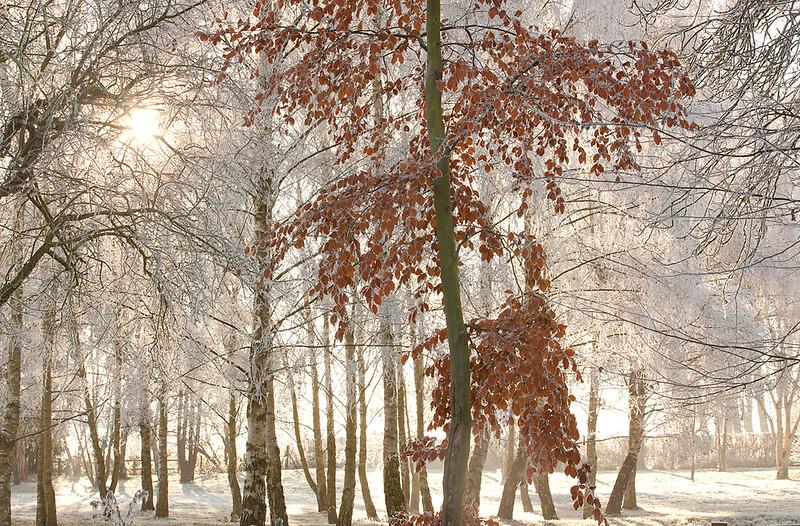 Hoar frost 2.jpg