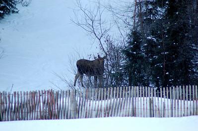 2009 Junior Olympics: Anchorage, AK  ** March 3-7, 2009
