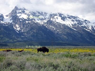 Jackson Hole- Teton National Park