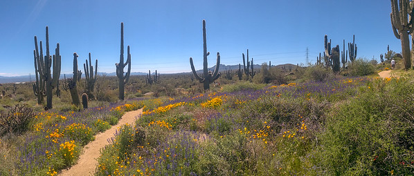 3/23/19 Granite Mountain Hike for Wildflowers