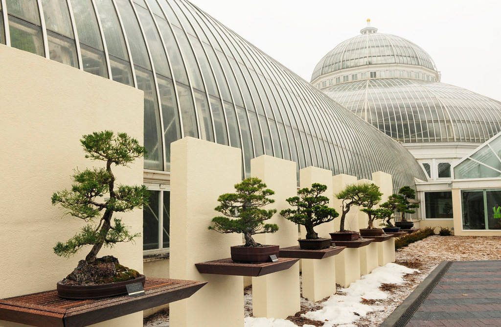 . The new $2.8 million building and landscape addition at the Ordway Gardens opened to the public in April at the Como Park Conservatory in St. Paul. (Pioneer Press: Scott Takushi)