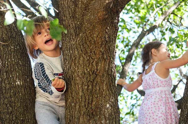 Tree Climbing 10-22-2017