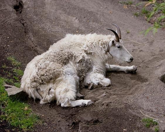 07-04-2008 Oregon Zoo