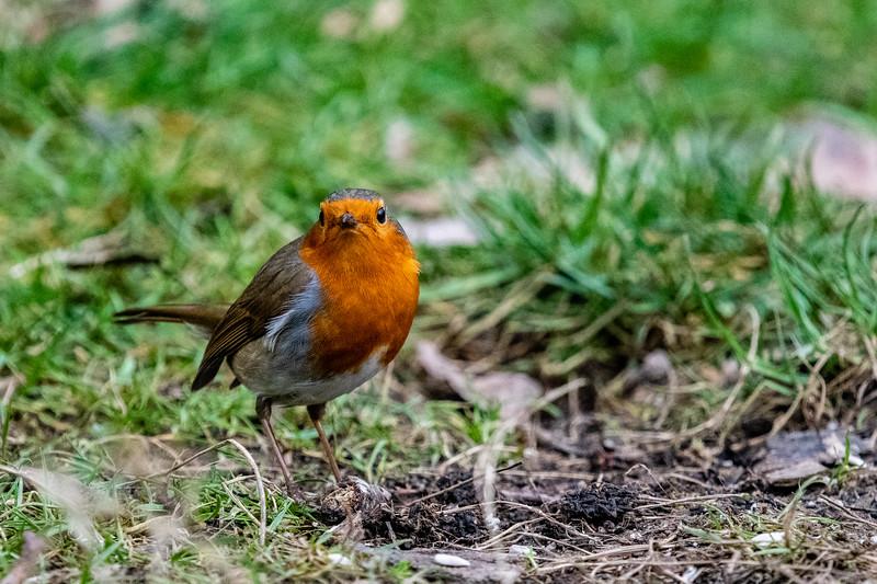 Robin-11.jpg