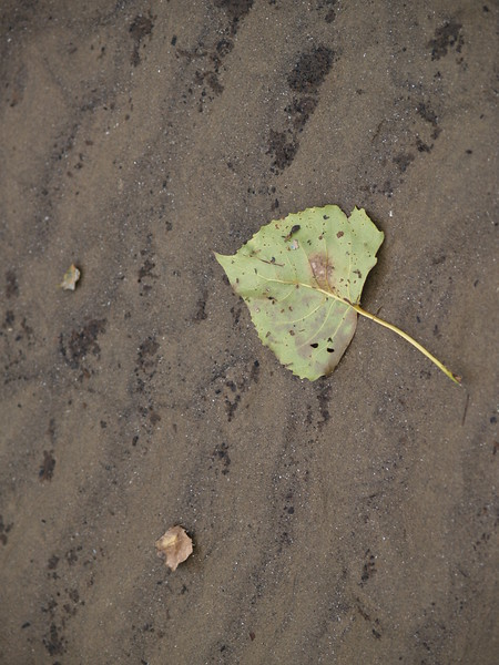 A leaf on the beach at Sheldon Marsh, Lake Erie.