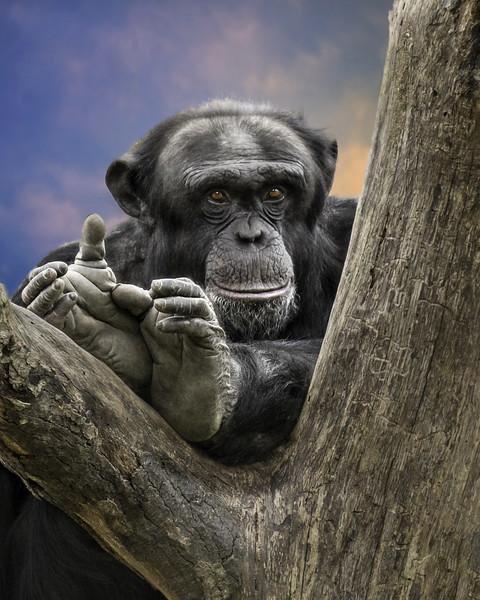 Monkey REMASK-Edit-Edit-Edit.jpg
