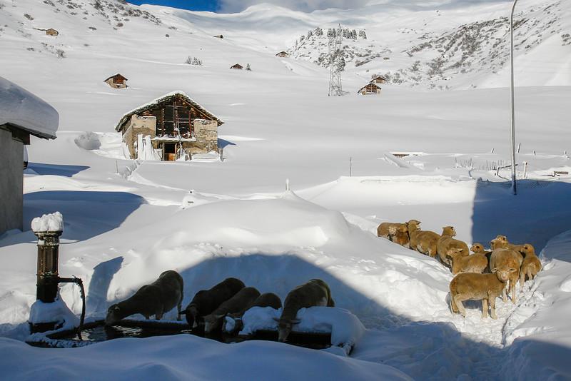Rheinwald-Winter-Landwirtschaft-D-Aebli-2699.jpg