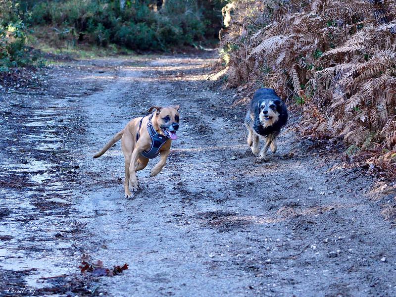 Running dogs #2