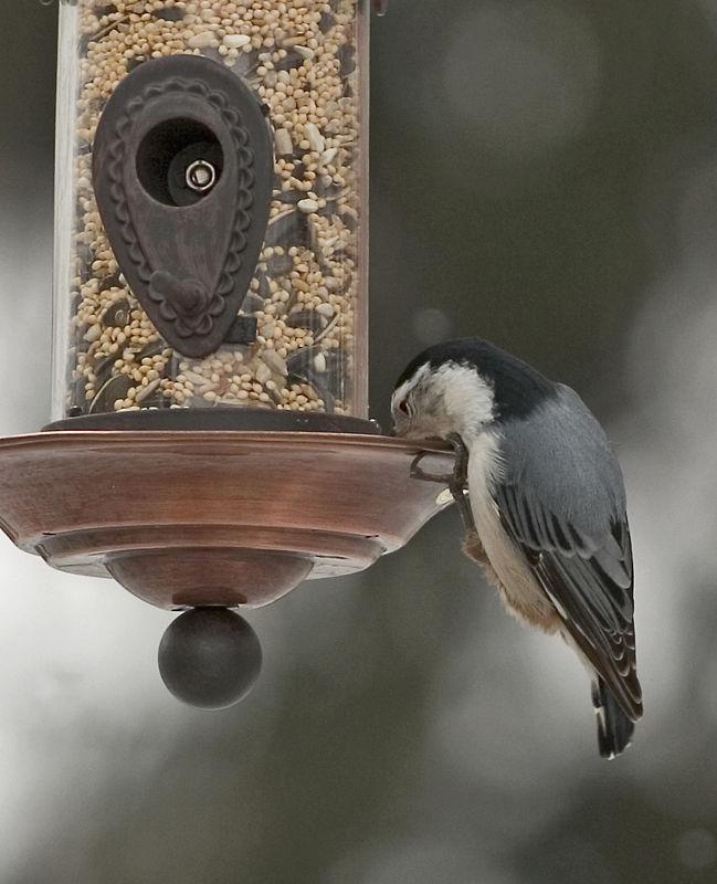 BirdFeed.jpg