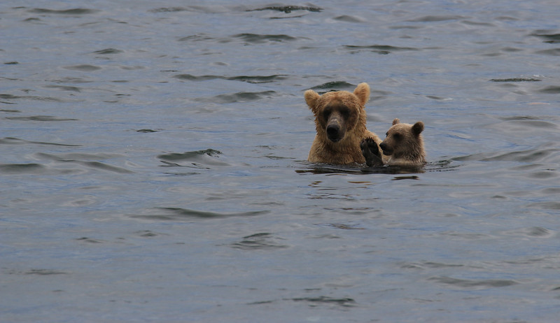 Mama and Baby Bear.jpg