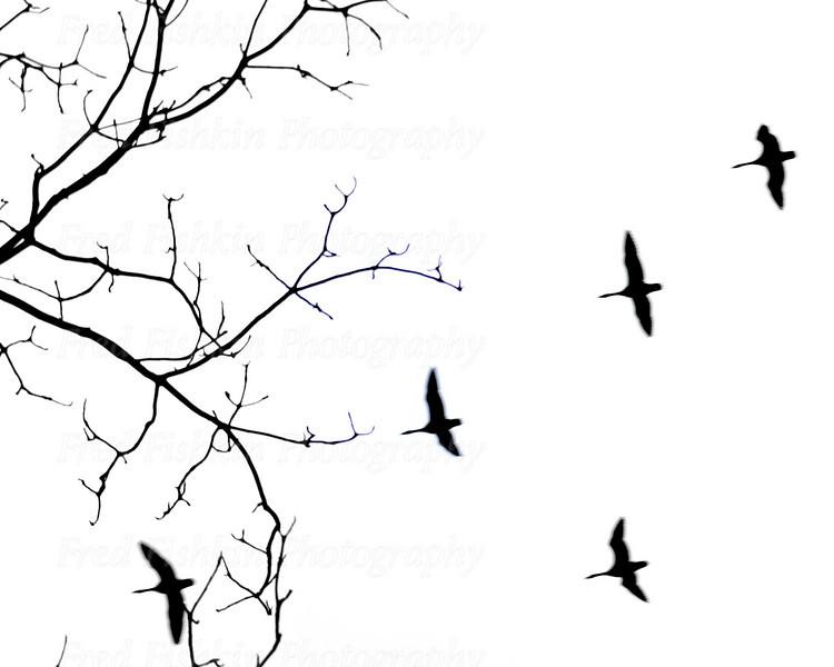 geese sky.jpg