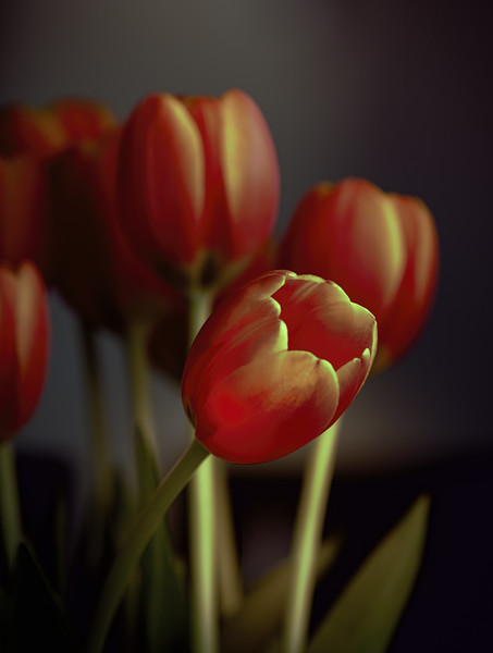 Carrie's Tulips