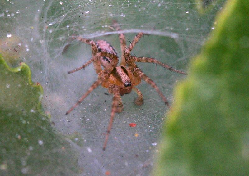 5928 Spider.jpg