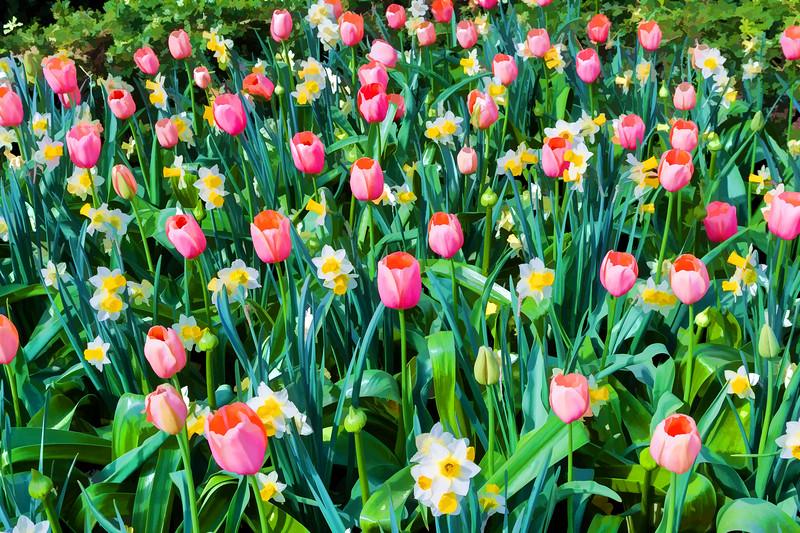 Tulips03