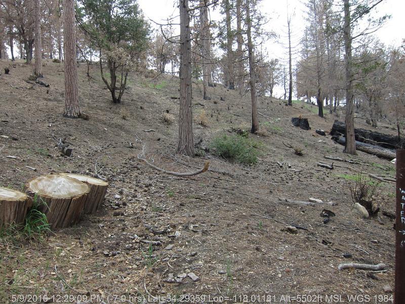 20100509108-Trail Recon, Silver Moccasin-Charlton Connector Trail.JPG