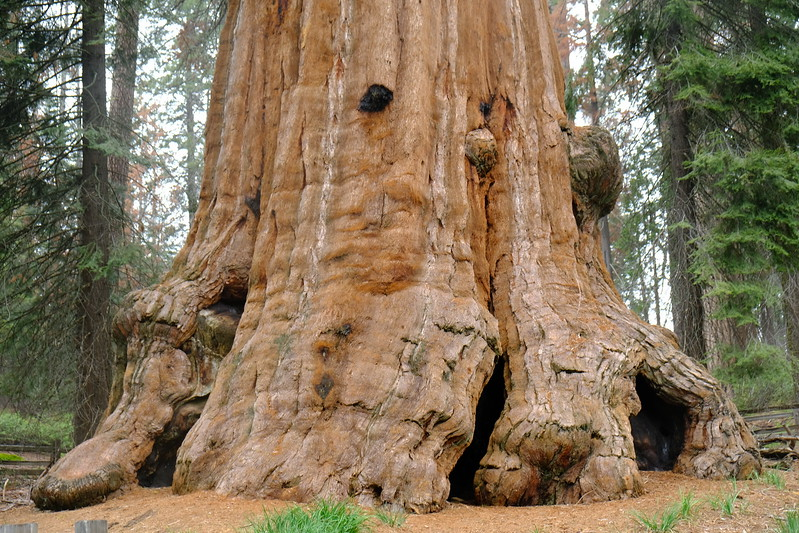 California Day 6 Sequoia 05-30-2017 147.JPG