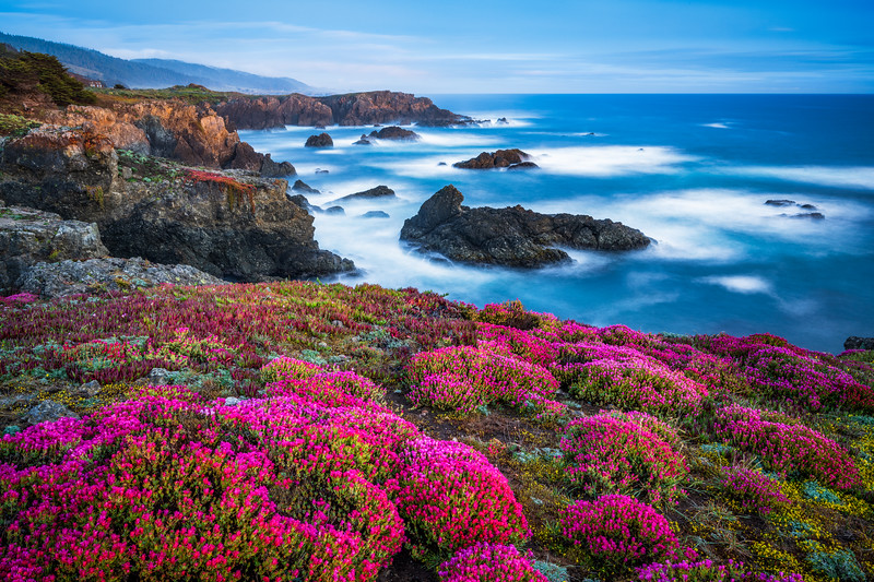 Bihler Point & Spring Bloom, Study 2, Sea Ranch, California