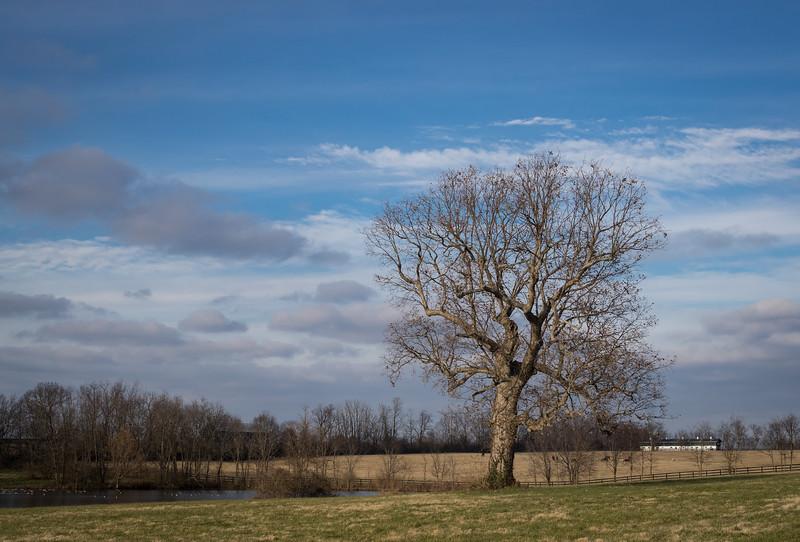 Mereworth Farm 11.29.18