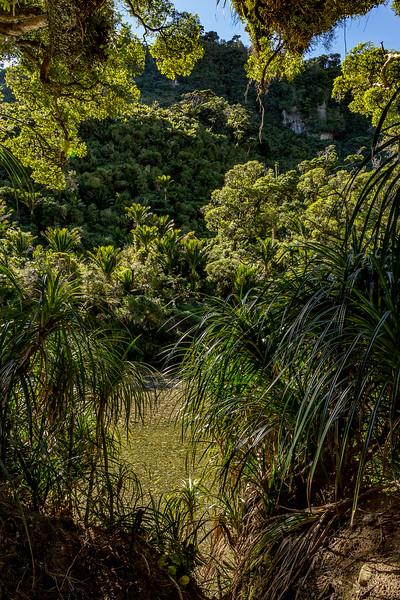 Auf dem «Pororari River Canyon Track»