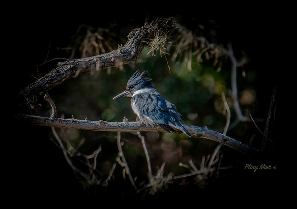 Kingfisher 4_DWL8808.jpg