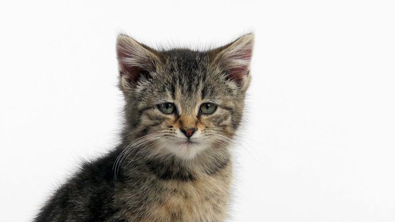 kitten_306_03.mov