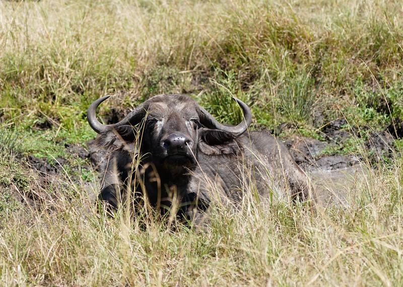 safari-2018-55.jpg