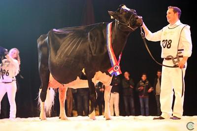 Holstein Classes